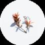 Réflexologie plantaire - Rééquilibrage, élimination, detox, bien-être, forme, santé